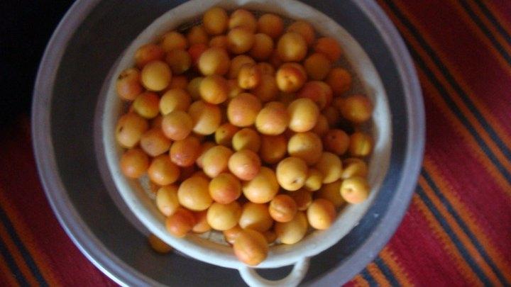 04-apricots-in-jaghori
