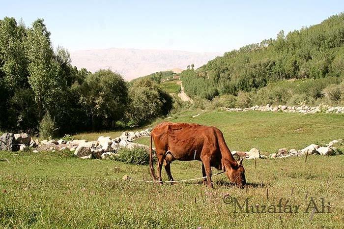 bamyan-foladi-valley
