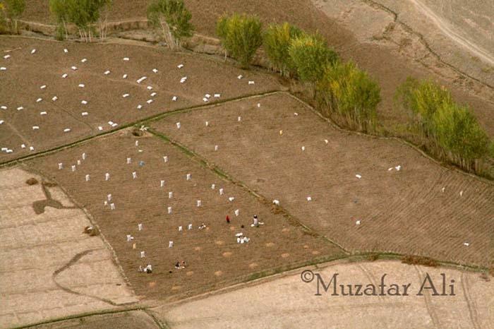 bamyan-potato-fields