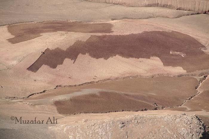 bamyan-panjao-district-crop-harvest